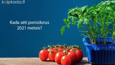 kada seti pomidorus 2021