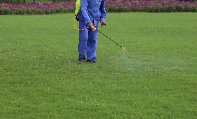 Herbicidai nuo samanu