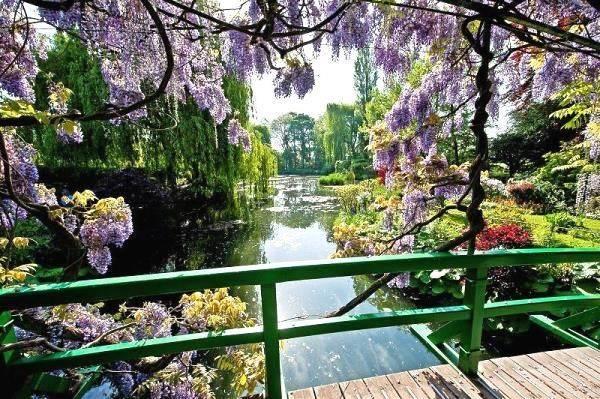 Claude Monet sodas