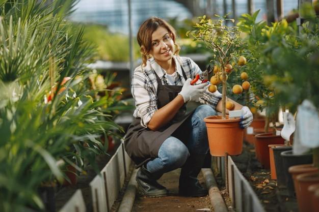 Kaip neapsigauti perkant sodo augalus