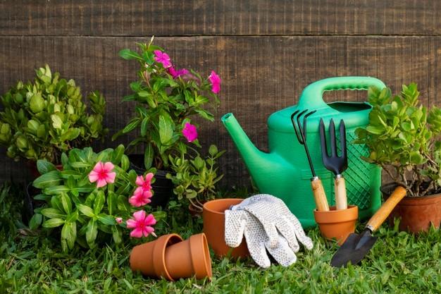 Kaip tinkamai priziureti savo soda