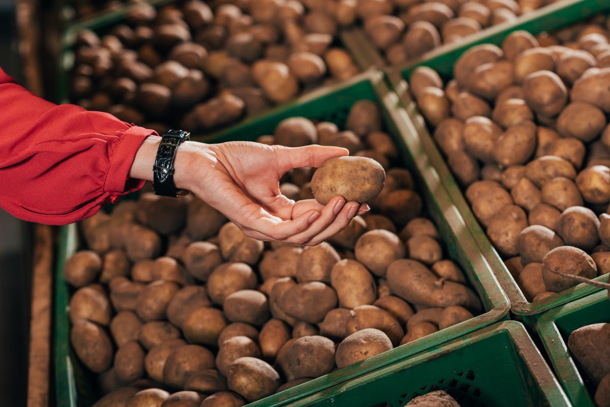 bulviu sodinimas