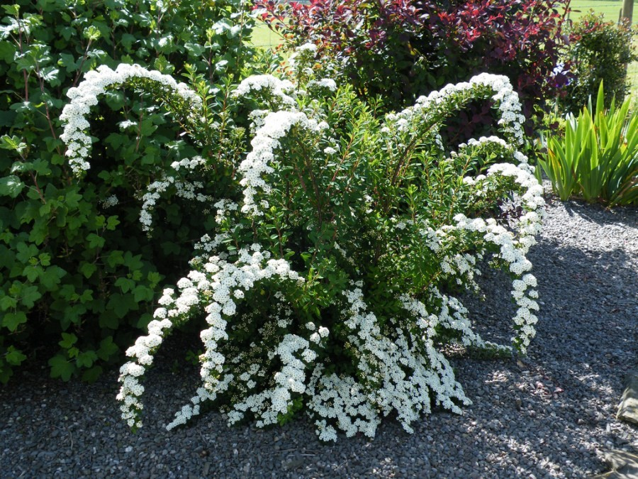dekoratyviniai augalai 23
