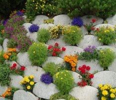 dekoratyviniai augalai 26