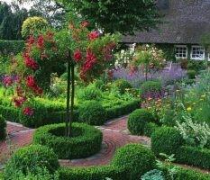 dekoratyviniai augalai 5
