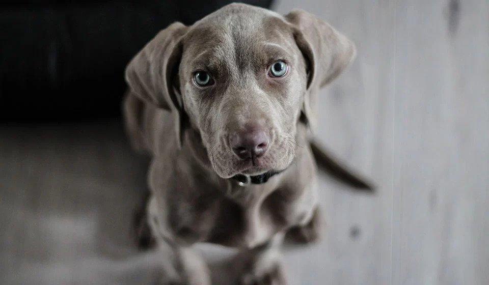 kaip dresuoti suni