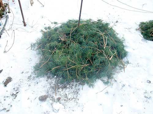 sodinuku uzdengimas ziemai