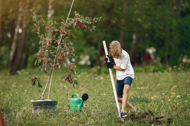 sodo augalu sodinimas