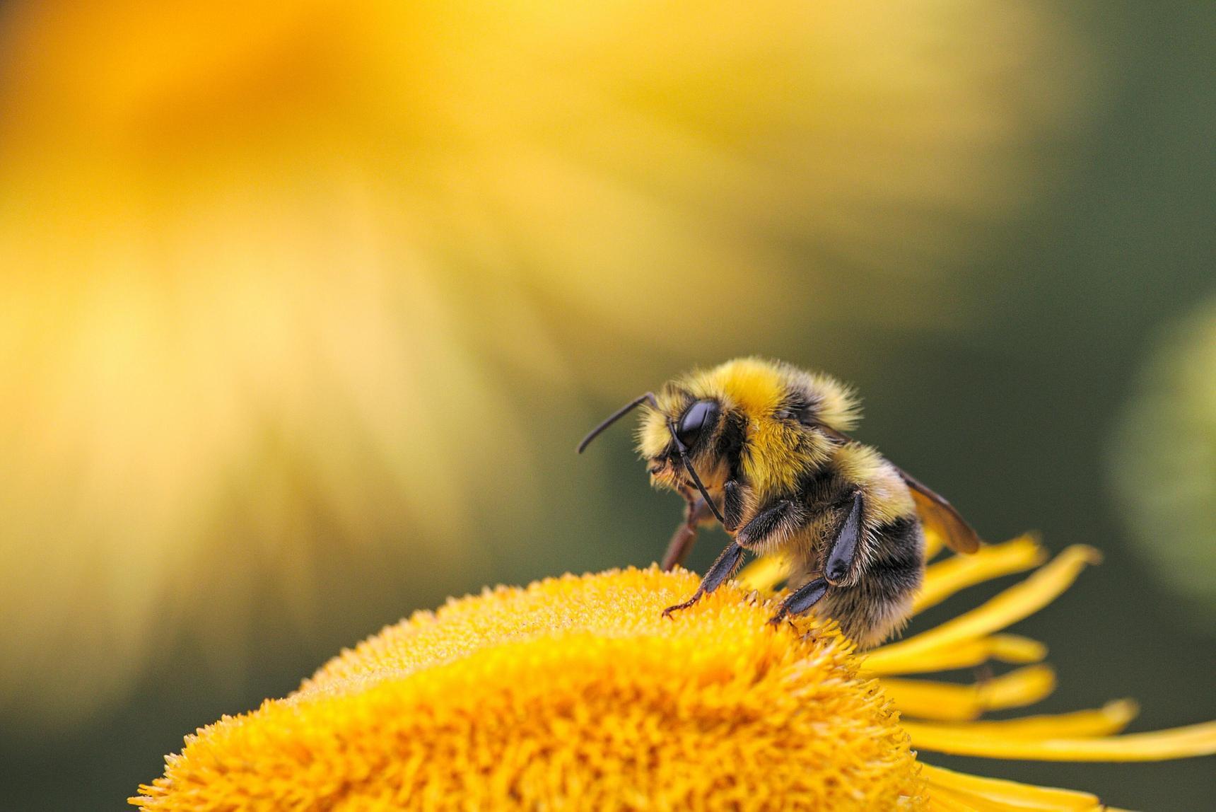 bites ir koronavirusas