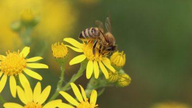 ka daryti jeigu ikando ar igele bite